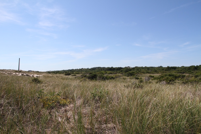Acres of dunes and forest