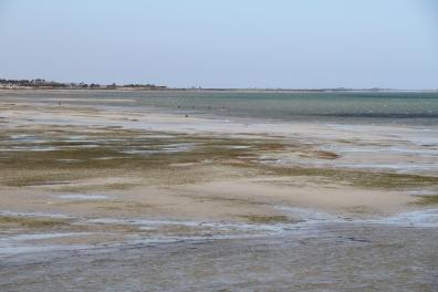 Salt Flats Gippsland
