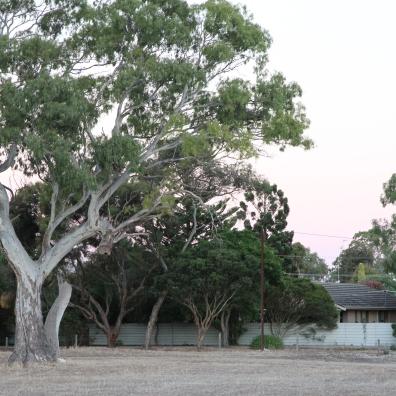 2016-01-25 Tree 6