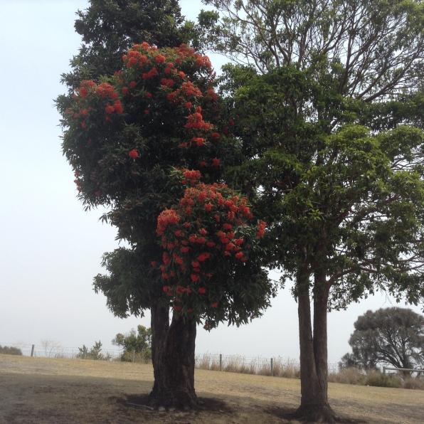 2016-01-26 Tree 5