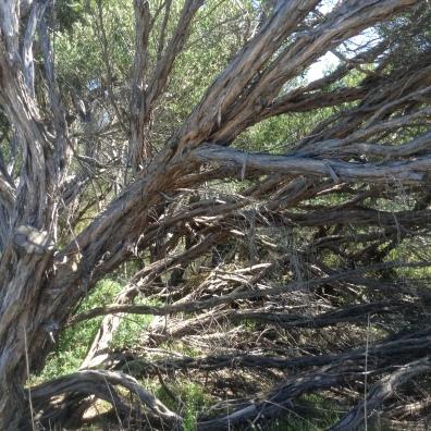 2016-02-06 Tree 1