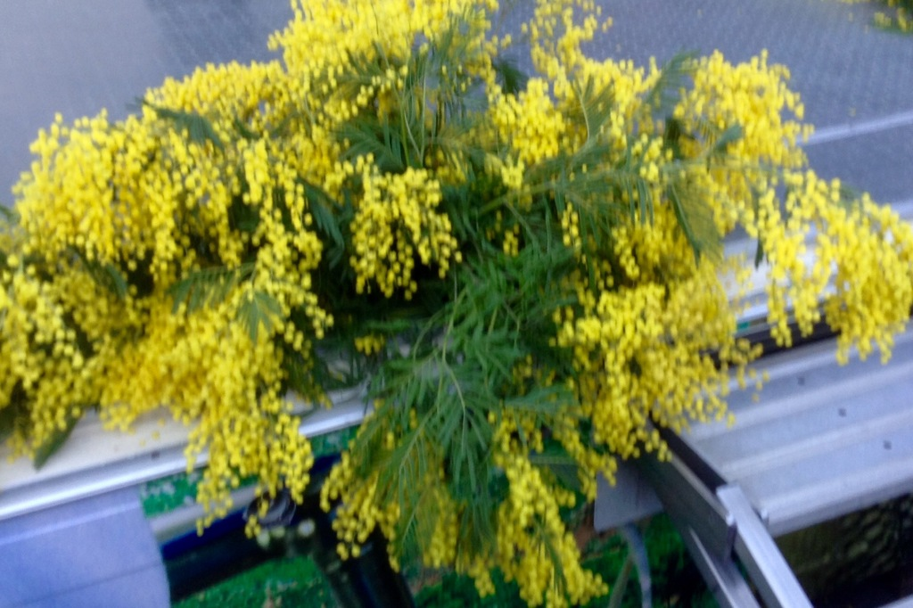 Mimosa decorated podium