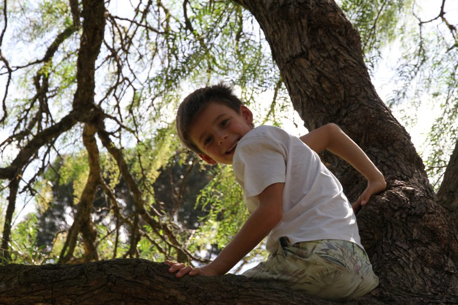 Friend's son in tree