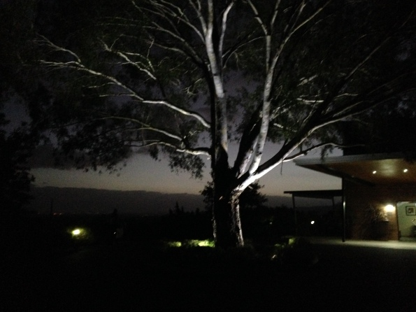 2016-02-03 Tree 4
